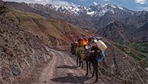 Ride a Camel, Atlas Mountains, Morocco