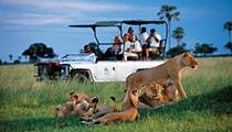 Go on Safari in Okavango Delta, Botswana