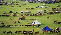 Jointhe Naadam Festival,Mongolia