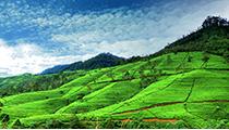 Travel the Nuwara Eliya Tea Trails, Sri Lanka