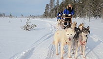 Dogsled in Lapland, Finland