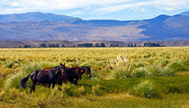 Gallop a Horse, Las Pampas, Argentina